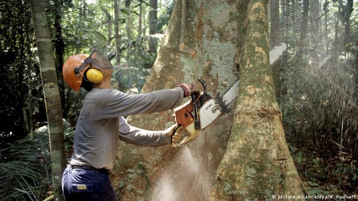 Brasilien Abholzung des Regenwaldes (picture-alliance/dpa/W. Rudhart)