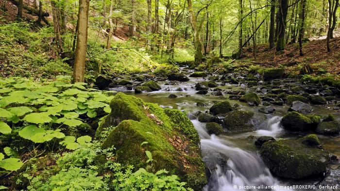 Thüringen | Urwald im Vessertal - Biosphärenreservat Vessertal-Thüringer Wald (picture-alliance/imageBROKER/O. Gerhard)