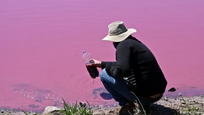 Un hombre recoge agua de la laguna Cerro durante una protesta contra una curtiduría cercana que supuestamente arroja desechos químicos al lago provocando que su agua se torne de color rojo rosado, en Limpio, a 25 km al noreste de Asunción, el 22 de agosto de 2020.