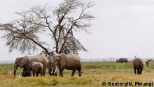 Elephants graze at the Amboseli National park, Kenya August 8, 2020. Picture taken August 8, 2020. REUTERS/Njeri Mwangi