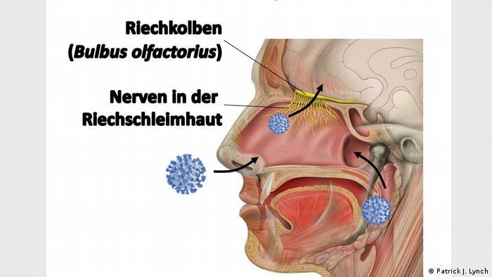 Illustration: Eingangstore von Corona Virus in Organismus