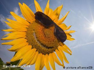 Полсолнух в очках от солнца на фоне голубого неба