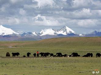 Tibet Plateau Flash-Galerie