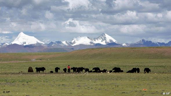 Tibetans graze their yak in the grasslands of the high Tibetan plateau in the county of Naqu, Tibet