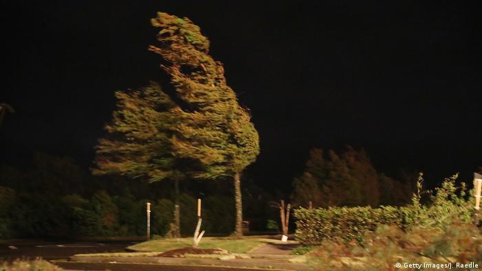 Trees blowing in heavy wind