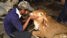 eco India Sendung #97 Thema Neuanfänge, Rinder