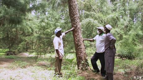Eco Africa - Reforesting Senegal's eroding coastline in the Niayes region