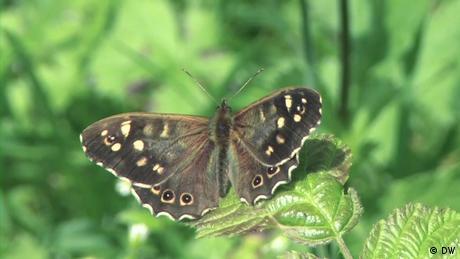 Eco Africa - UK volunteers help in world's biggest butterfly census