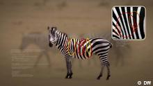 DW Eco Africa - Fotoapp