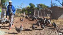 Chicken, Zimbabwe Bilder aus der DW-Sendung Eco Africa