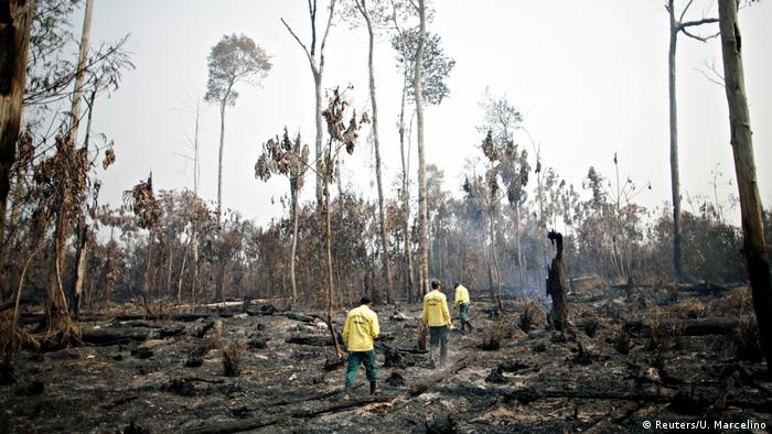 Brasilien Brände im Amazonas