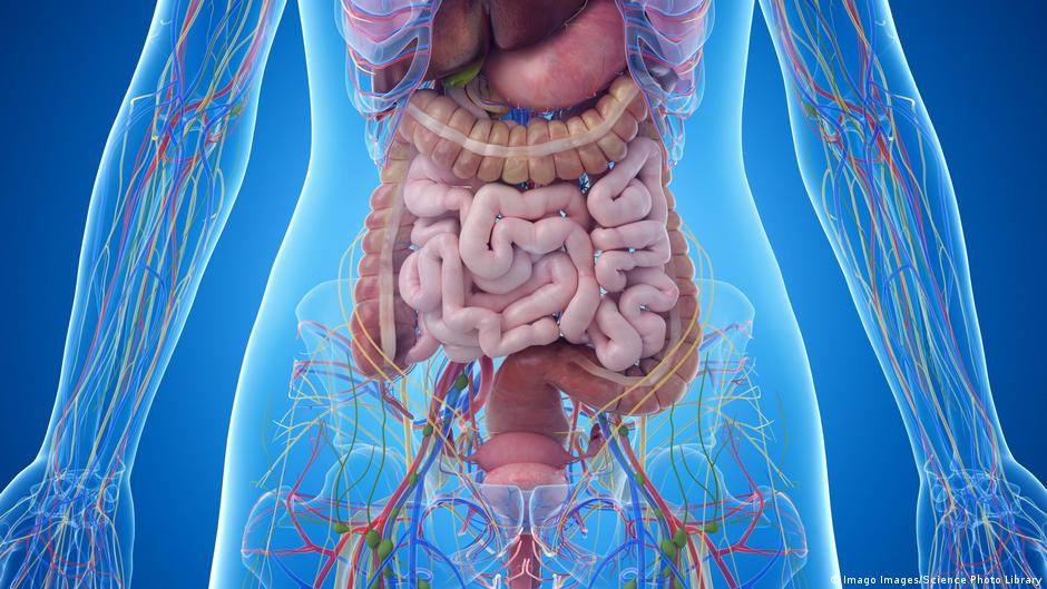 Stool transplants: A way to bring gut bacteria back to health