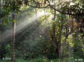 Maior reserva de floresta tropical do mundo está em solo brasileiro