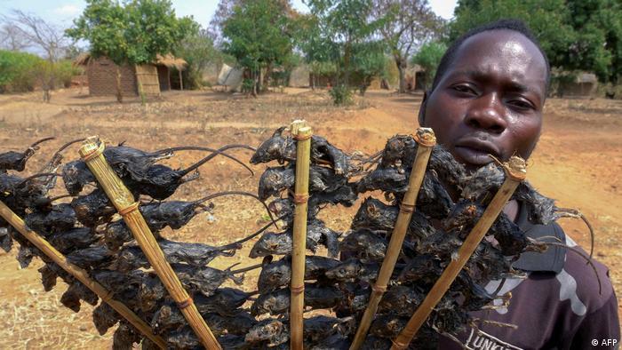 Malawi Nahrungsmangel | gebratene Mäuse verkauft