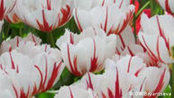 Das Russische Jahr im niederländischen Blumenpark Keukenhof