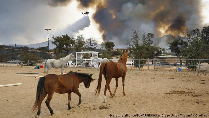 به گفته کارشناسان، تغییرات آب و هوایی به افزایش خشکی و حرارت که خود زمینهساز جنگلسوزی است منجر میشود.