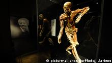 Bodies and parts of bodies are seen at the Body Worlds exhibition at the Palace of Culture and Sciences in Warsaw, Poland on December 21, 2018. The Body Worlds exhibition is one of the worlds most succesfull exhibtions having attracted more than 47 million visitors since its inception 1995. (Photo by Jaap Arriens/NurPhoto) | Keine Weitergabe an Wiederverkäufer.