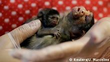 Brasilien | Amazonas-Regenwald Rettung von Tieren nach Bränden