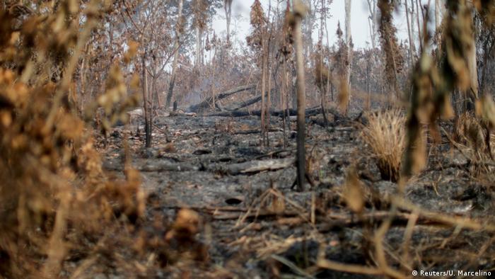 Brasilien   Amazonas-Regenwald Rettung von Tieren nach Bränden