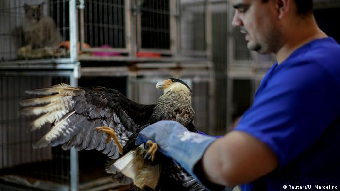 Brasilien | Amazonas-Regenwald Rettung von Tieren nach Bränden (Reuters/U. Marcelino)
