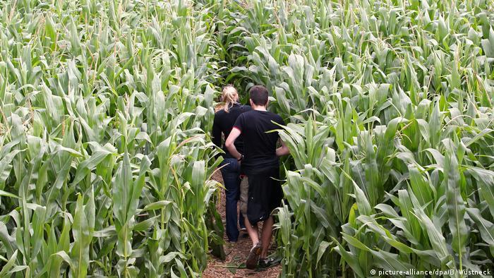 Zwei Leute in einem Maislabyrinth (picture-alliance/dpa/B. Wüstneck)