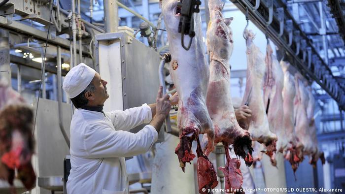 Halal slaughtering at a abbatoir in Bordeaux in France preparing meat for the Muslim festival Eid al Adha