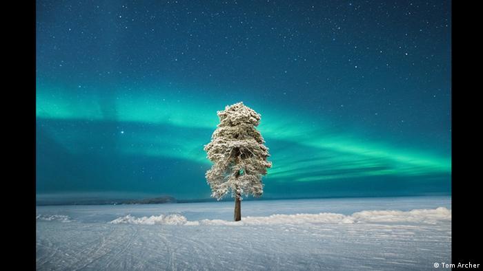 Ein Foto des Fotografen Tom Archer: Bei einer Erkundungstour in der winterlichen Landschaft Finnlands entdeckte er den einsamen Baum, den er als Motiv für sein Bild auswählte. (Tom Archer)