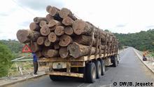 Foto 1 1. Titel: Fahrzeug mit illegalem Holz wurde von der Polizei in Manica beschlagnahmt. 2. Bildbeschreibung: Fahrzeug mit illegalem Holz wurde von der Polizei in Manica beschlagnahmt. 3. Fotograf: Unsere Korrespondent Bernardo Jequete (DW/B. Jequete) 4. Wann wurde das Bild gemacht: 10.09.2020 5. Wo wurde das Bild aufgenommen: Manica, Mosambik 6. Schlagwörte: Mosambik, Manica, illegalen Holzeinschlag