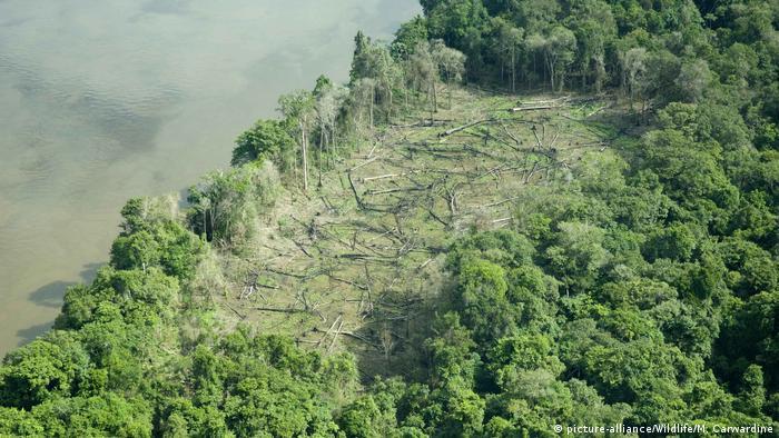 Brasilien | Amazonas Regenwald | illegale Rodung (picture-alliance/Wildlife/M. Carwardine)