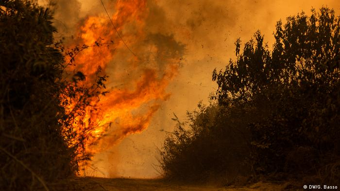 Brasilien Pantanal Waldbrände