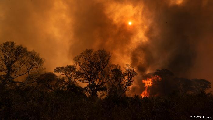 Incêndio florestal na região de Poconé, no Pantanal Mato-grossense