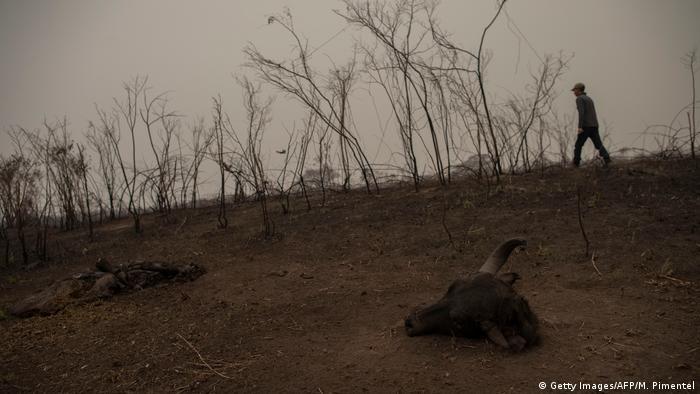 Brasilien Waldbrände Pantanal (Getty Images/AFP/M. Pimentel)