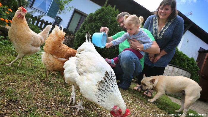 Familia con niños alimenta a sus gallinas en su propio jardín.