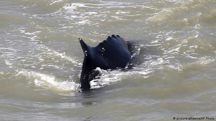 Foto de una ballena en Nueva Zelanda