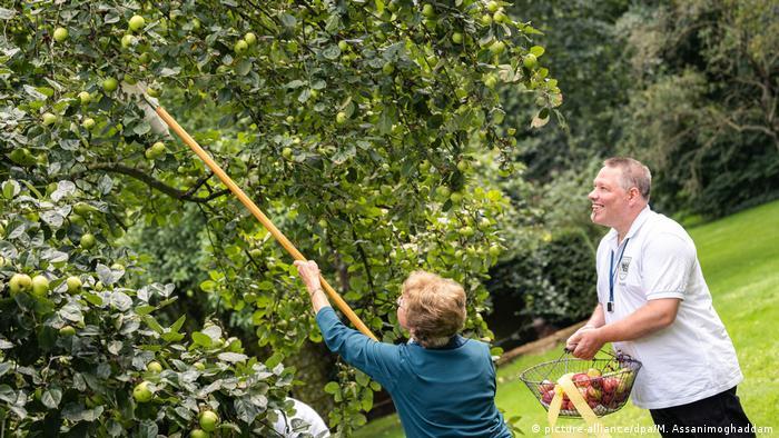 Залезать на деревья и ломать ветки нельзя, но использовать специальные подручные средства можно и нужно