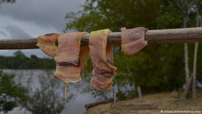 Carne é seca na Reserva Extrativista Guariba-Roosevelt
