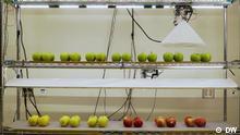 Onlinebilder für Global 3000 für die Sendung am 21.09.2020 Global Apeel Ein US-amerikanisches Unternehmen entwickelt ein Mittel, das Lebensmittel haltbarer macht. Copyright: DW