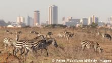 NAIROBI, KENYA - JANUARY 08: Zebra roam free in front of the Nairobi skyline at the Nairobi National Park on January 8, 2008 in Kenya. Tourism is a $1 billion industry in Kenya. Some tour operators have temporarily banned package holidays over fear of post election violence. (Photo by Peter Macdiarmid/Getty Images)