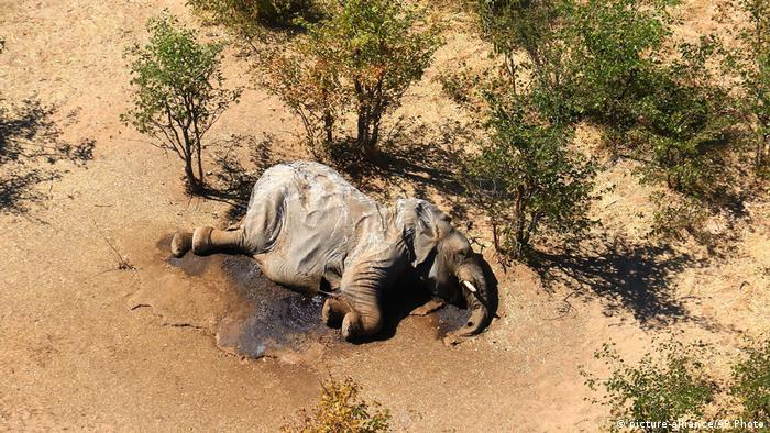 Afrika Botswana Elefantensterben