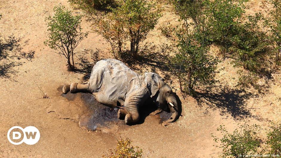 Botswana: Bacteria in water behind mass elephant deaths