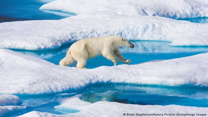 A polar bear walking across melting ice