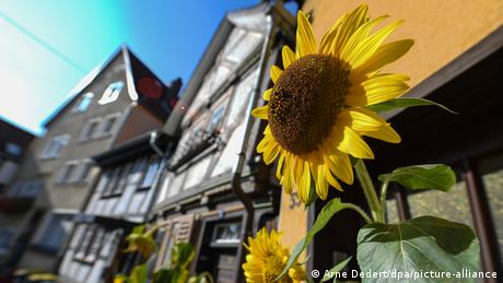 Quaint half timbered-house and sunflower