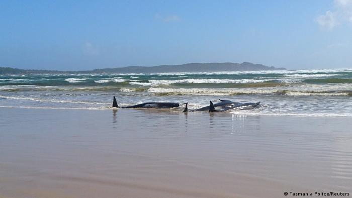 (Tasmania Police/Reuters)
