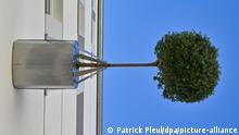 Deutschland BdT   Bäume an Hausfassade