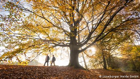 Two people walking under a tree in autumnal Germany