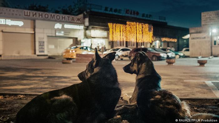 Кадр из фильма Space Dogs