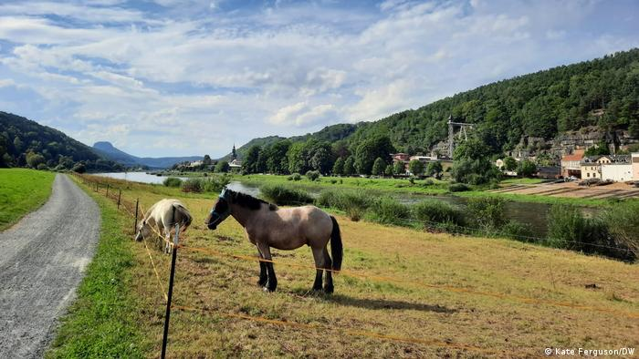 A view of the Elbe river shores near Bad Schandau in Germany, with two horses grazing on the banks of the river