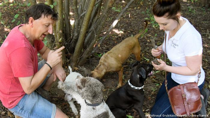 Гунтер Калов (Gunter Kahlow) с дочерью Йози Мари Хорн (Josy Marie Horn) и специально обученными собаками на своей плантации