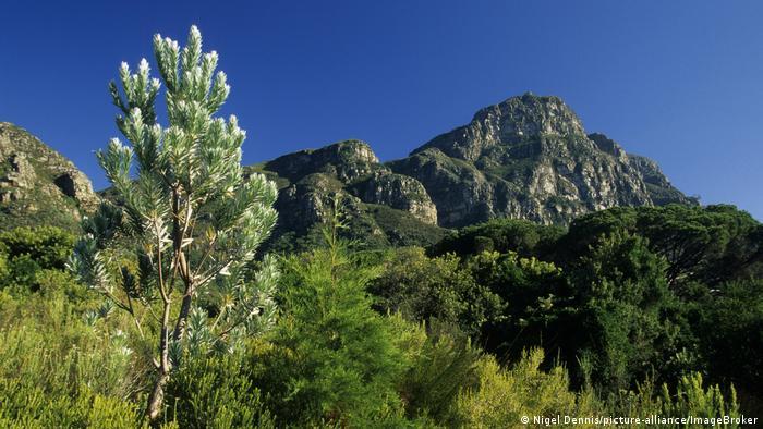 Alt: The fynbos in South Africa