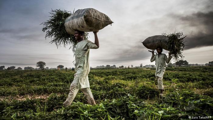 Farmers in Nigeria